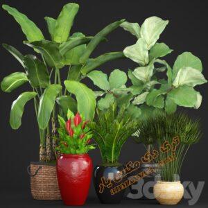 آبجکت گل و گیاهان طبیعی شماره 7
