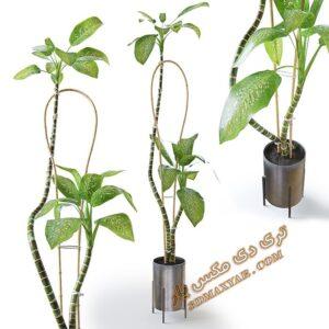 دانلود آبجکت گل و گیاهان طبیعی شماره 4