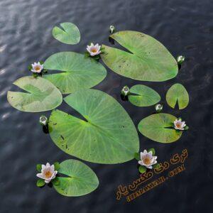 دانلود آبجکت گل و گیاهان طبیعی شماره 5