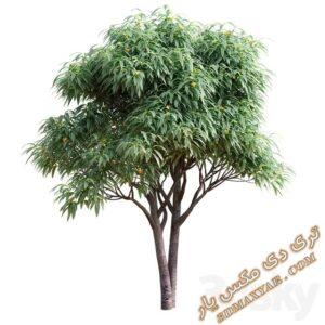 آبجکت گل و گیاهان طبیعی برای تری دی مکس شماره 24