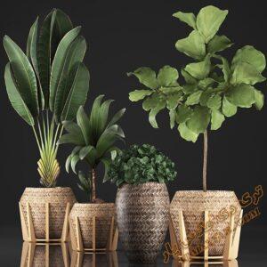 آبجکت گل و گیاهان طبیعی برای تری دی مکس شماره 27
