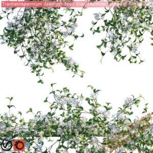 دانلود آبجکت گل و گیاهان طبیعی برای تری دی مکس شماره 29
