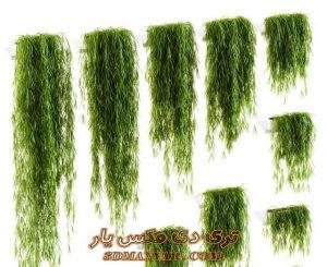 دانلود آبجکت گل و گیاه برای تری دی مکس شماره 45
