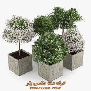آبجکت گل و گیاهان طبیعی برای تری دی مکس شماره 34