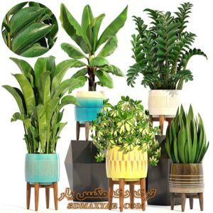 کلکشن آبجکت های گل و گیاه برای تری دی مکس شماره 40