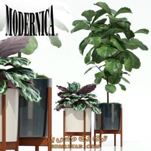آبجکت گل و گیاه برای تری دی مکس شماره 44